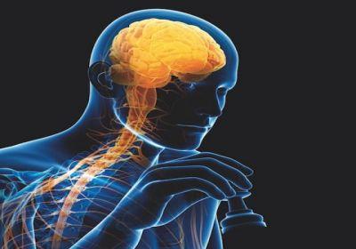 Cerveau et apprentissage: que dit la science?